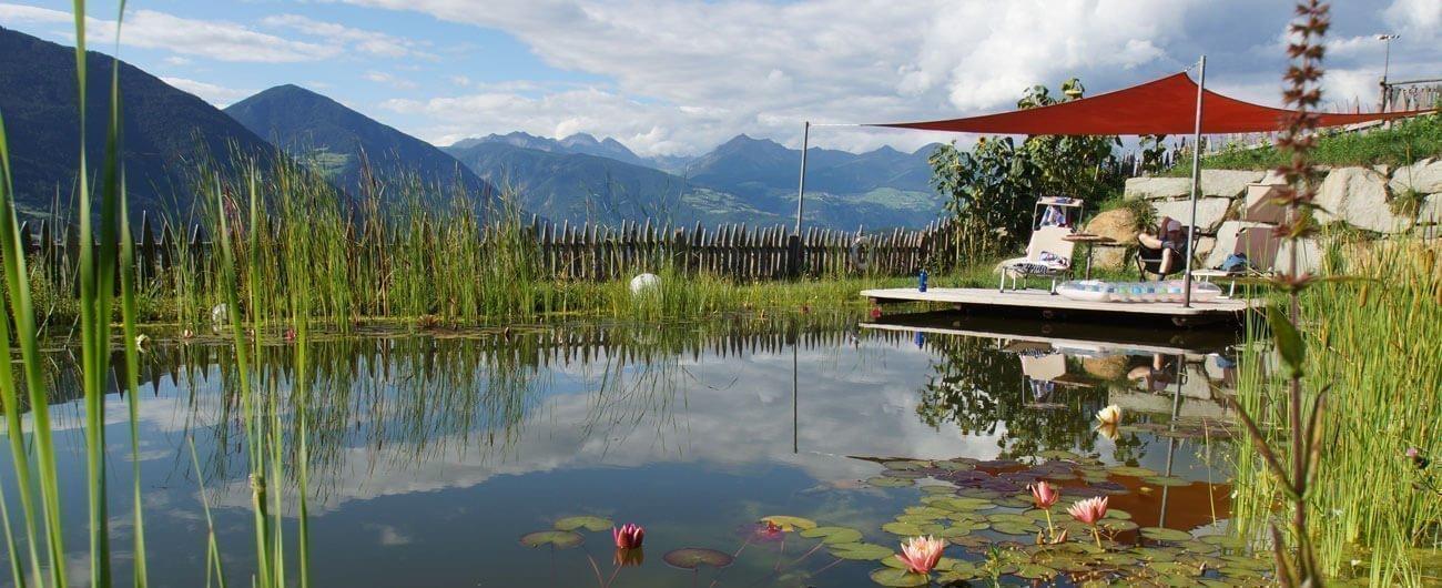 Unser Naturbadeteich am Sedlhof